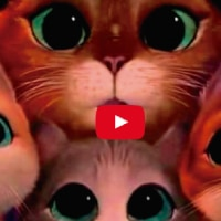 galería de videos de youtube